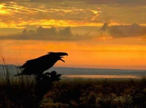 Borrego sunrise with Wind God Bird sculpture. Photo: Sam Webb.