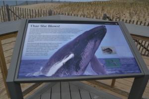 Herring Cove Whale Exhibit