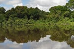 Impenetrable jungles along the Courantyne River between Guyana and Suriname.