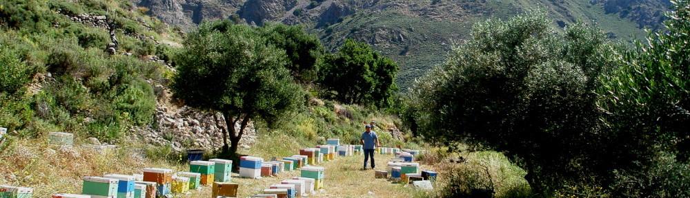 Crete's Culinary Sanctuaries Study Tour. Photo by Nikki Rose