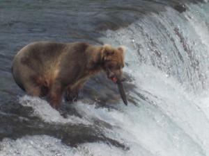 BearFalls1