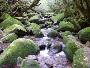 Yakushima Island, Japan.