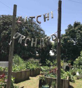 Litchi Orchard, KwaZulu-Natal.